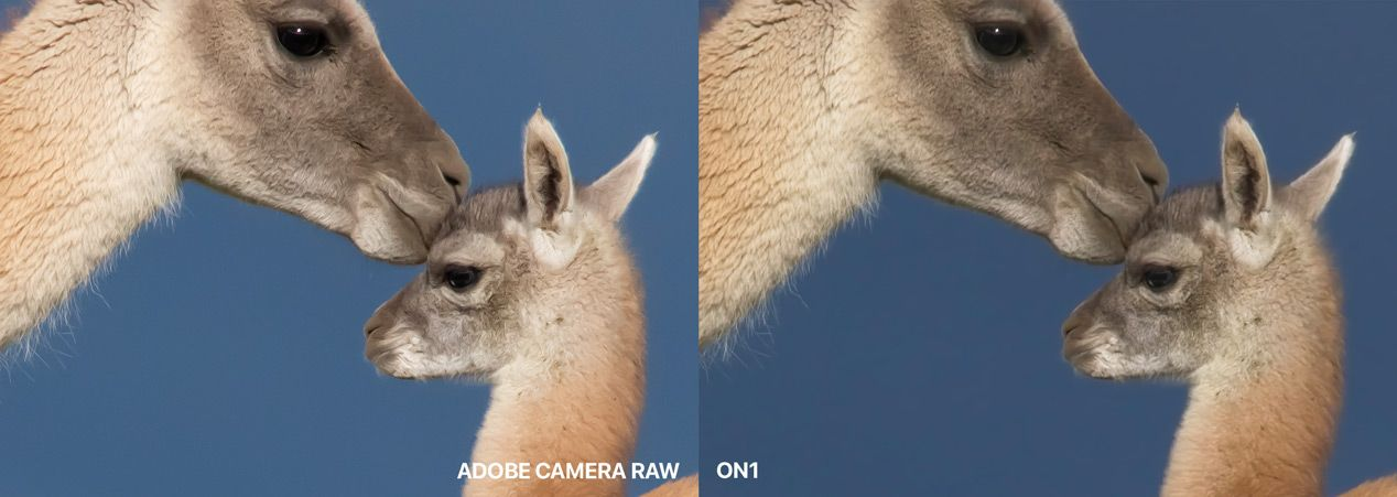 Adobe Camera Raw Compared to ON1 at 200%