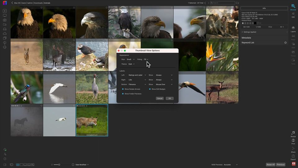 Customize Your Photo Viewing in Browse